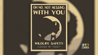 Baltimore Native, Reporter In Montana Becomes Face Of Bison Safety Poster