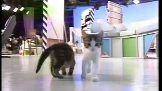 Blue Peter - new cats at play