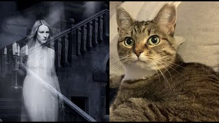 5 Signs Your Cat Can See Ghosts