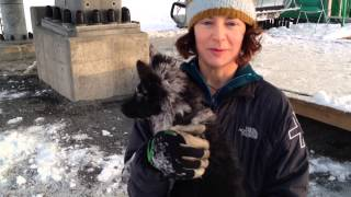 Interview: Stacie Lordan, With Avalanche Rescue Pup Kilo