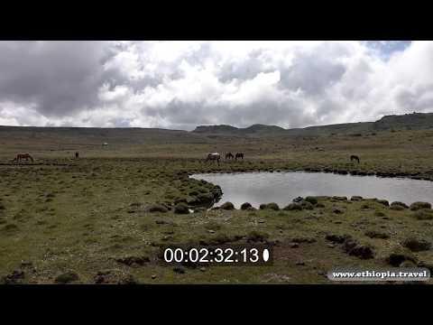 Ethiopia - Bale National Park Plateau (Part 6)