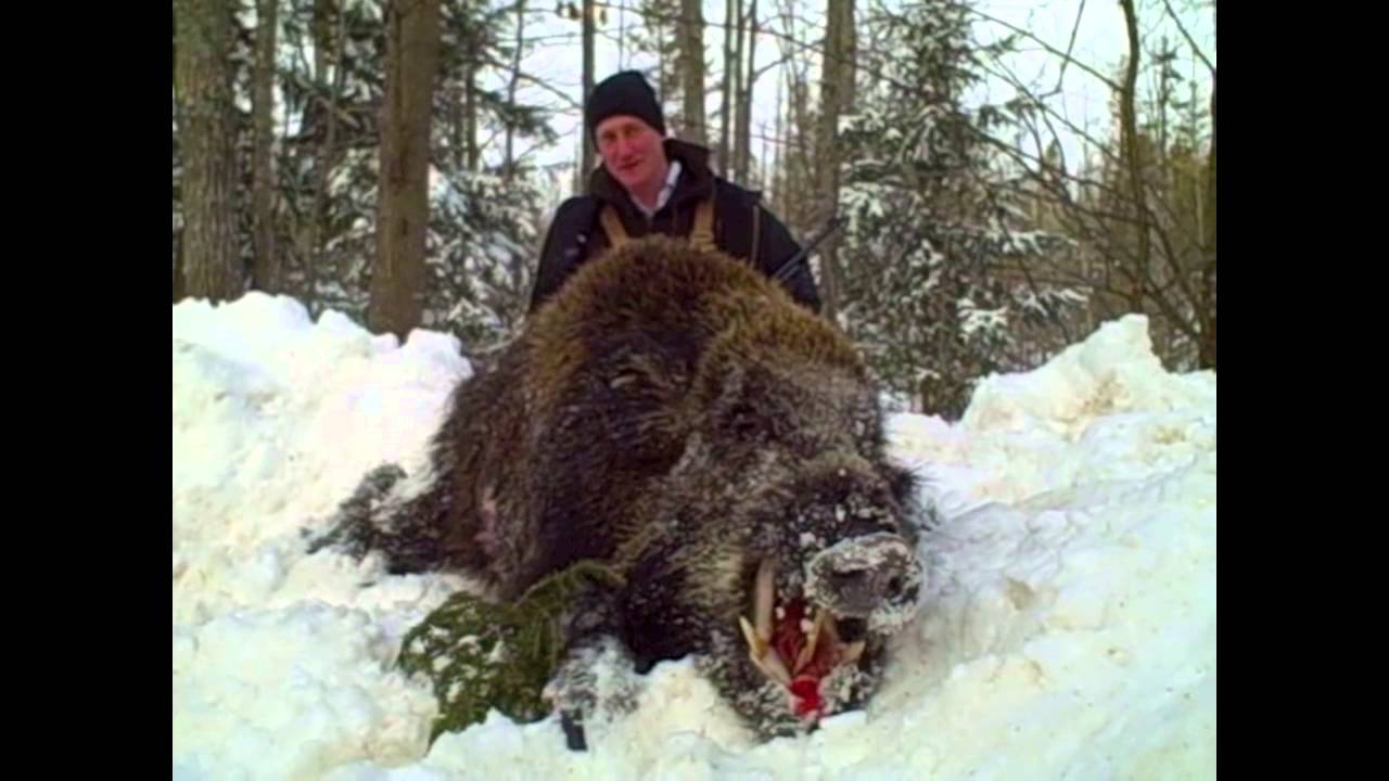 Russian Boar - Giant Boar Shot By Nebraskan Hunter - YouTube Giant Wild Boar Photos