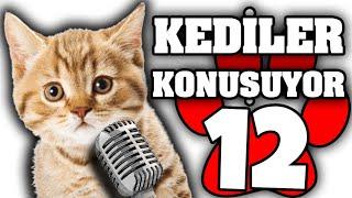 Konuşan Kediler #12 - En Komik Kedi Videoları