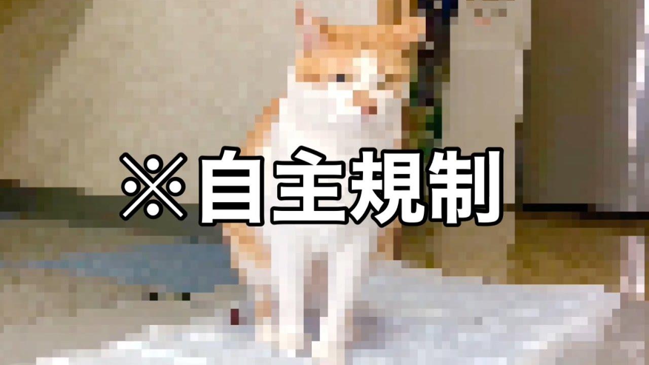 初!犬用ペットシーツで管理職が脱糞