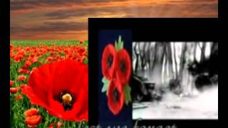 We wear the poppy Lest we forget : Gibson Songwriter Deluxe Accoustic