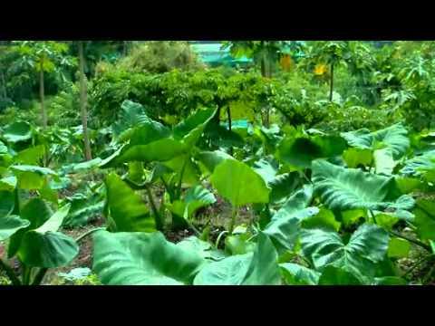 Noorumeni 355 Peringamala District Agri. Farm