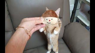 고양이 장난감 - 덕선이가 노는 법
