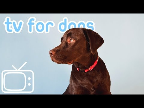 Dog TV! Desensitising City Walk in Manchester, UK! Virtual Reality for Dogs!