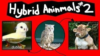 Internet Names for Hybrid Animals (Pt. 2)