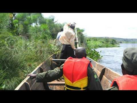 World's largest man-eating crocodile captured in Uganda by Uganda Wildlife Authority (UWA) officials