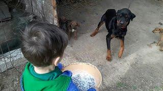 Gambar cover Bilge Kağan Bütün Köpeklerimize Mamalarını Veriyor Çünkü Çok Acıkmışlar