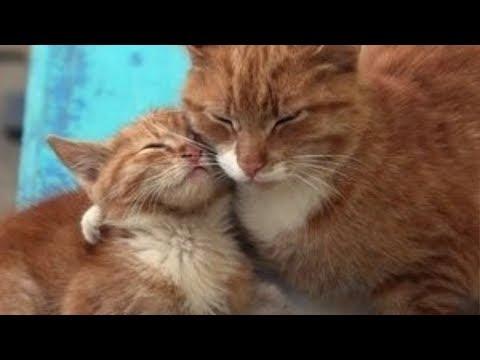 Поступок этой Мамы Кошки шокировал Ветеринаров