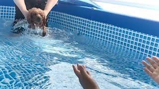 [ENG SUB] 견생 처음 구명조끼 없이! 수영해본 …