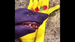 Shark Puppet Thanos