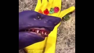 shark-puppet-thanos
