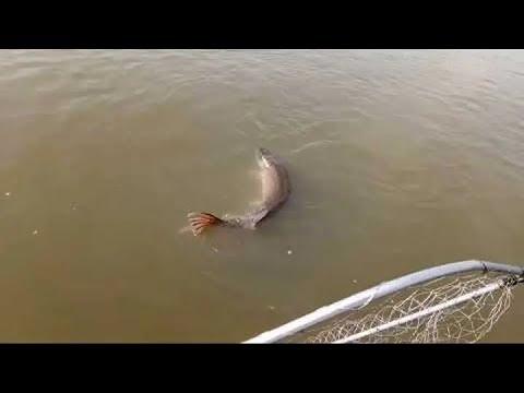 Рыбалка в Аксае на лодке. Яйца или Фидер? Ловля бешенного сазана!