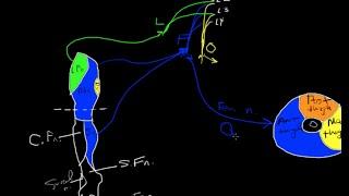 Lumbar plexus tutorial