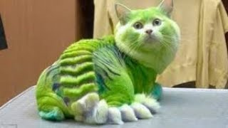 Rarest Cat Breeds Around the World
