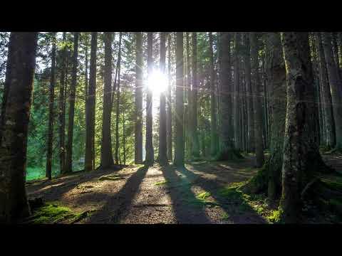 Meditative 8D Nature Sounds | Etihad