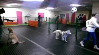 Dog Training Classes Cork