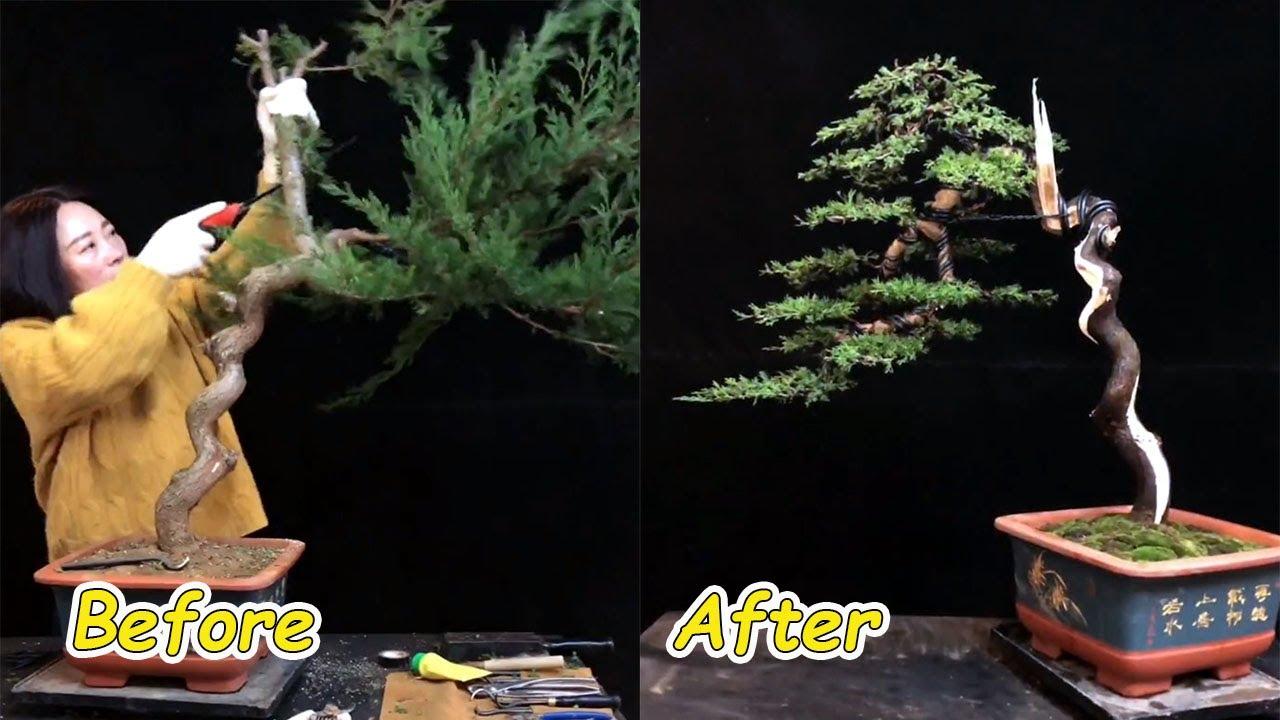 How to bend a bonsai - great bonsai bending skills #61