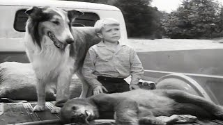 Lassie | The Archers | Full Episodes | Cartoons For Kids | Kids Movies