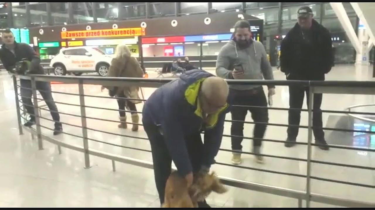 טיסה עם כלב מישראל לפולין - כתבו עלינו
