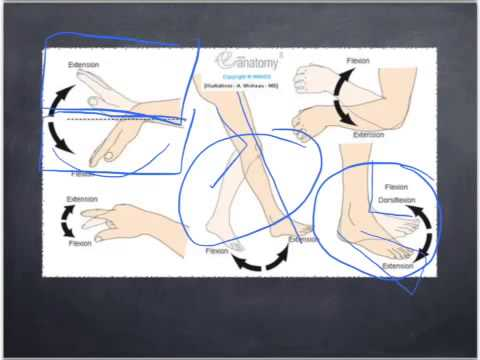 Anatomical Movements In The Human Body Youtube