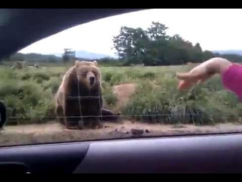 медведь прощается - видео онлайн