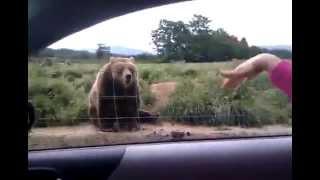 медведь прощается