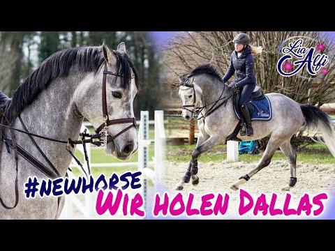 Lia & Alfi - Wir holen unser neues Pferd ab !