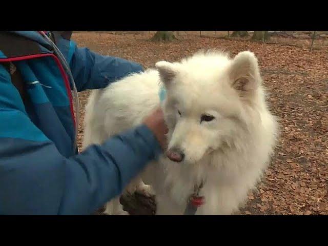 Wolle aus Hundehaaren: Besser als Cashmere