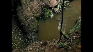 Самое необычное животное в мире  Утконос