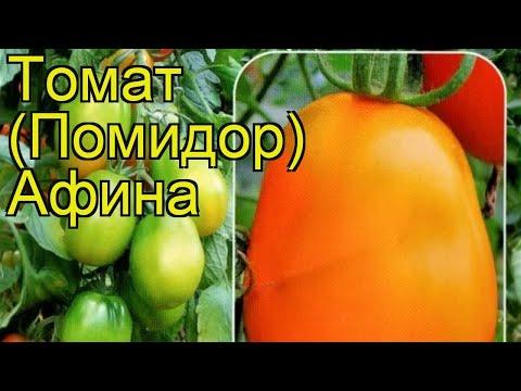 Томат обыкновенный Афина. Краткий обзор, описание характеристик, где купить саженцы, семена Afina