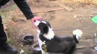 Дворовая собака, лучшая домашняя собака