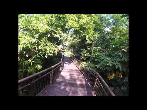 Canopy Walk Public Kent Ridge Park Singapore
