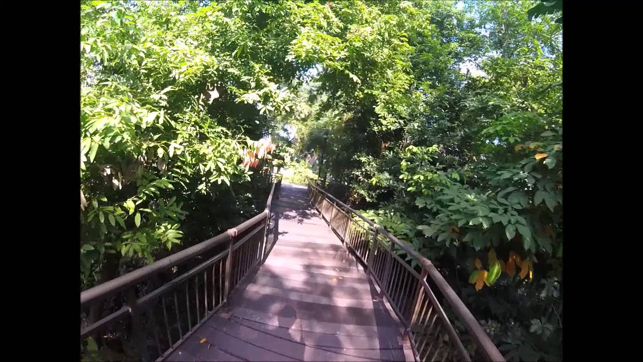 Canopy Walk Public Kent Ridge Park Singapore & Canopy Walk Public Kent Ridge Park Singapore - YouTube