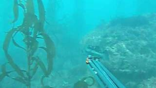 Spearfishing California, Monterey Peninsula