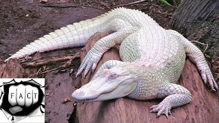 Top 10 Rarest Albino Animals In The World