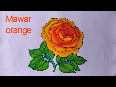 Cara Menggambar Bunga Mawar Yang Bagus Menggambar Dan Mewarnai Bunga Mawar Youtube