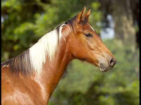para los amantes de caballos  YouTube