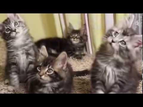 дар в кошки фото