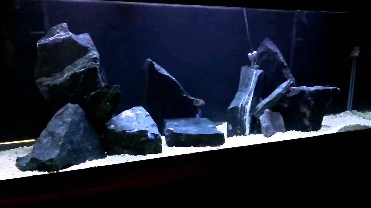 Mbuna African Cichlid rock scape - YouTube