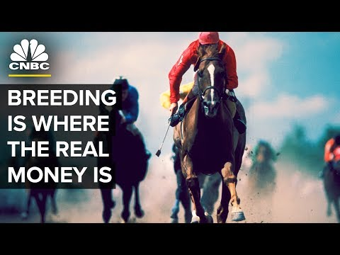The Kentucky Derby Winners And Stud Fees | CNBC