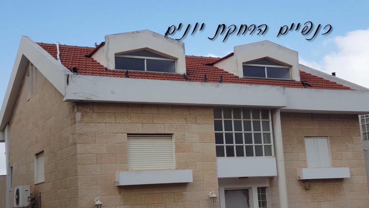 הרחקת יונים מגג רעפים בחיפה- כנפיים הרחקת יונים