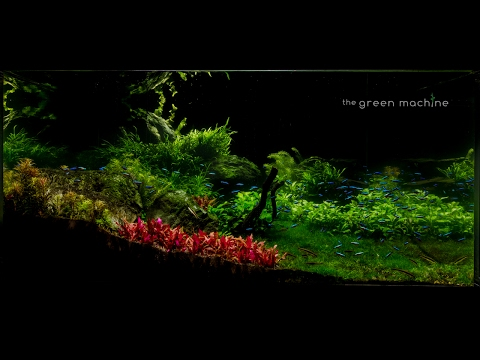 Huge Aquascape Tutorial Step by Step- Spontaneity by James Findley for The Green Machine