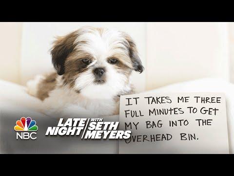 Extreme Dog Shaming: Overhead Bins, Hillary