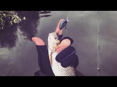 Этот Воблер ОТЛИЧНО ловит Голавля! Ловля Голавля на спиннинг, на малой реке.(АРХИВ)