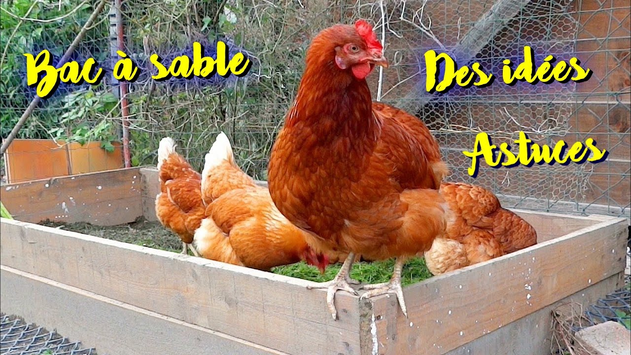 A Sandbox For Your Chickens My Tricks