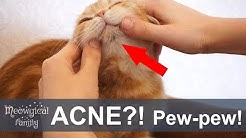 hqdefault - Cat Pimple Under Chin